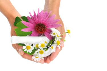 Hausmittel Echinacea Kamille