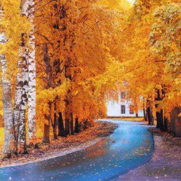 Den Herbst genießen